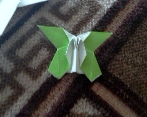 бабочка от антона кучкина