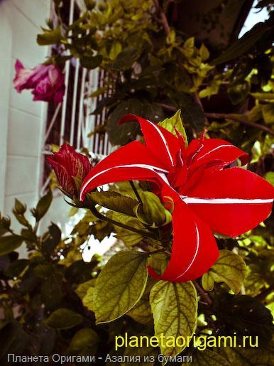 Оригами цветок из бумаги красного цвета
