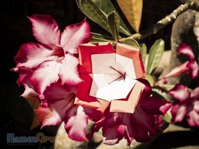 бумажный оригами цветочек