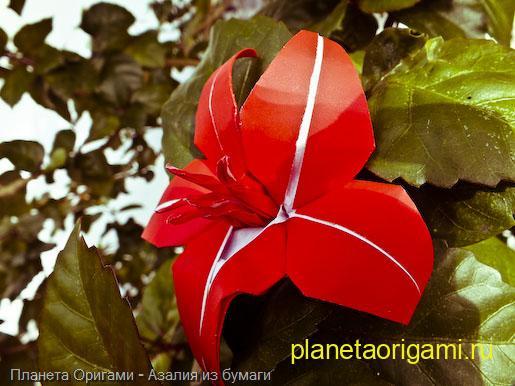 Азалия оригами