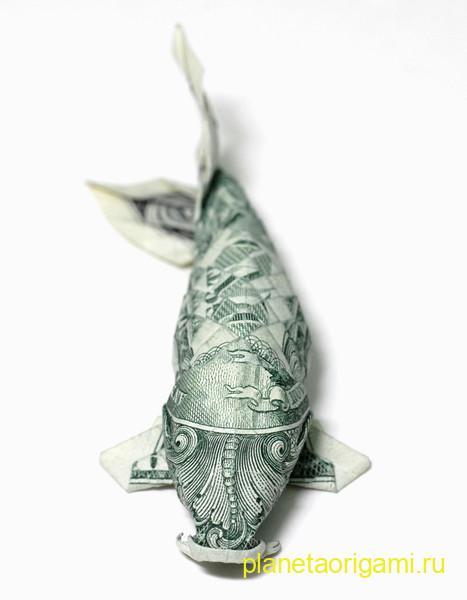 Dollar Koi Fish
