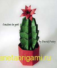 Cactus in pot ba David Petty
