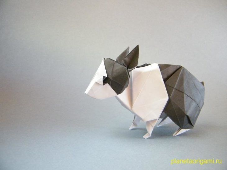Голландский кролик от Seth Friedman