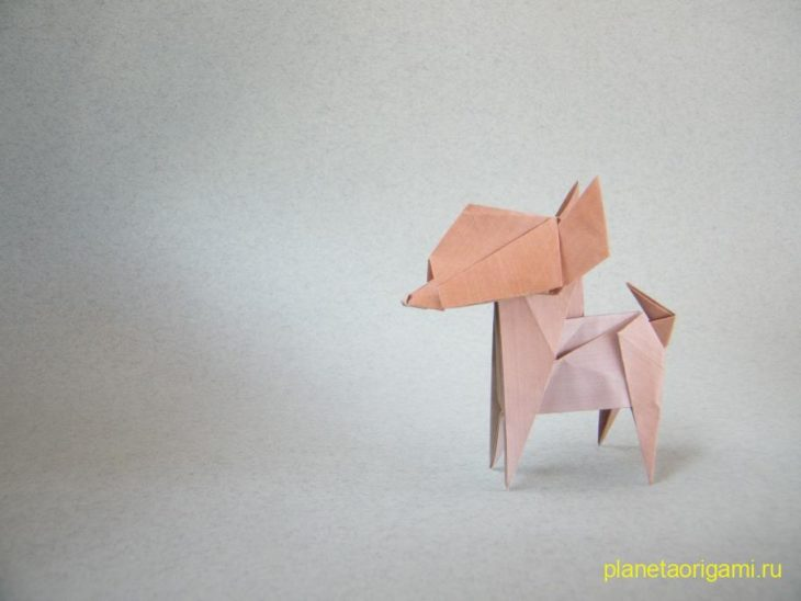 Dog Chihuahua (Fuchimoto