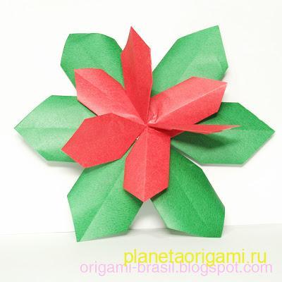 Пуансеттия (Poinsettia) от Fumiaki Shingu