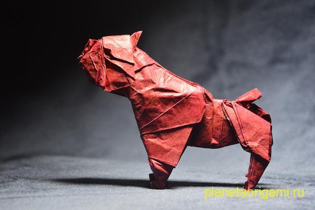 bulldog by Quentin Trollip
