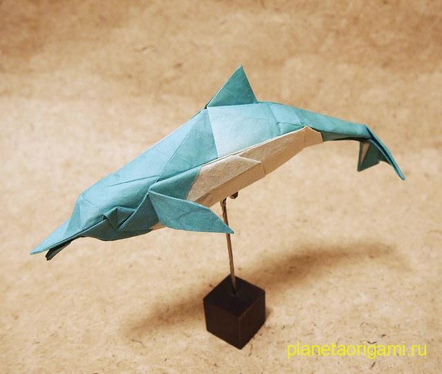 dolphin by Fumiaki Kawahata