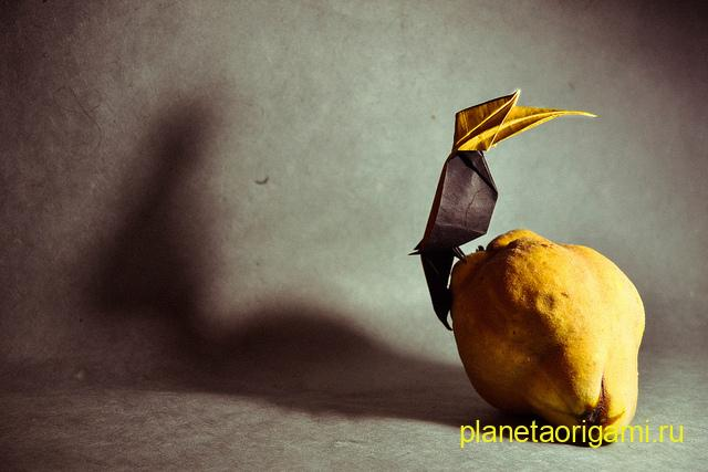 hornbill by Nguyen Vo Hien Chuong