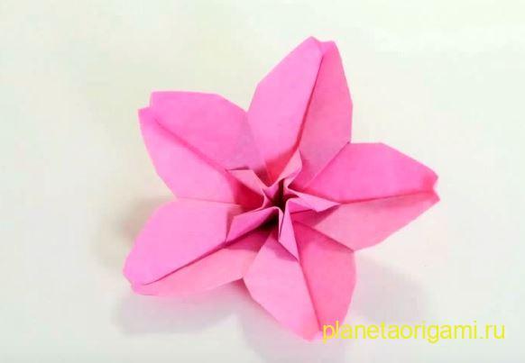 Цветок сакуры по схеме Hoang Tien Quyet