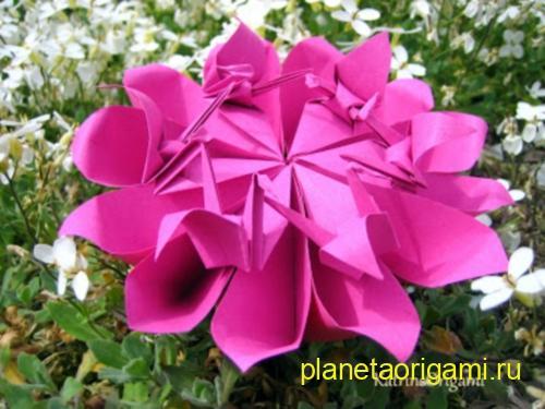 Crane Flower цветок с журавлями