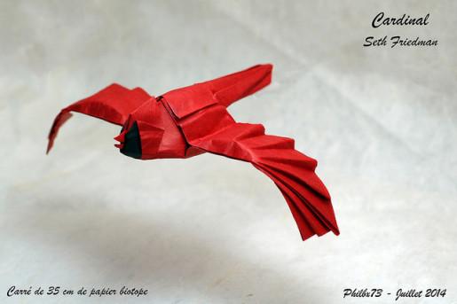 Seth Friedman cardinal