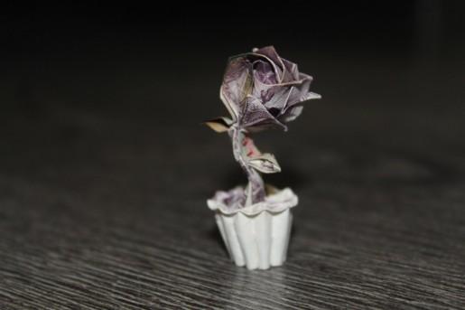 роза в горшочке