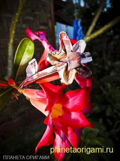 цветок из денег