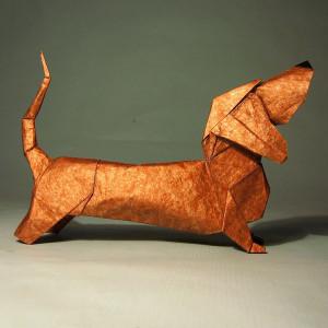 basset hound Trollip Quentin