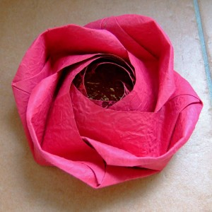evi rose
